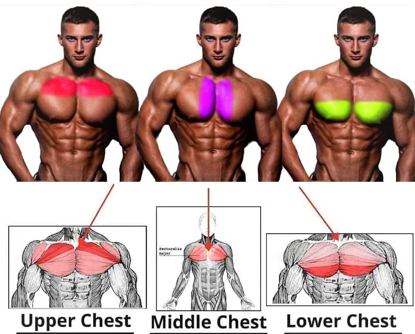 Pectoral Muscle Exercises