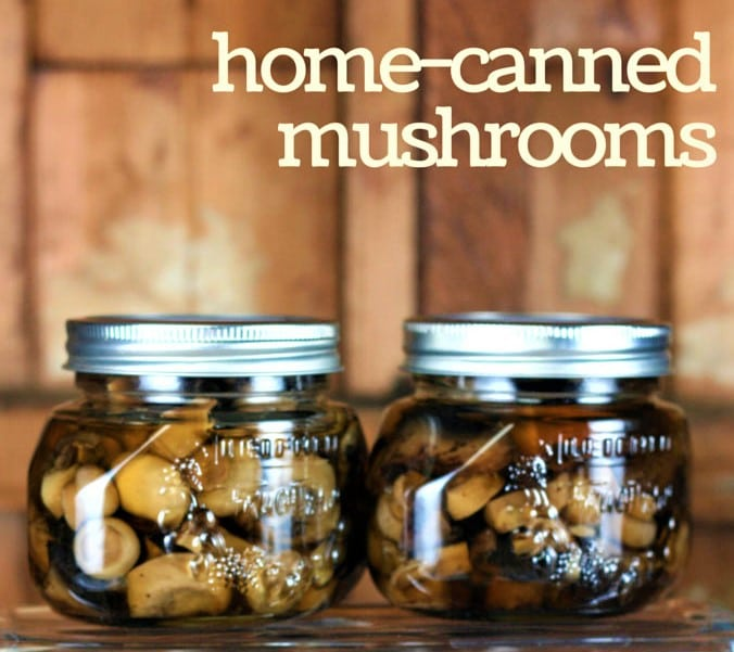 Canned or dried mushrooms