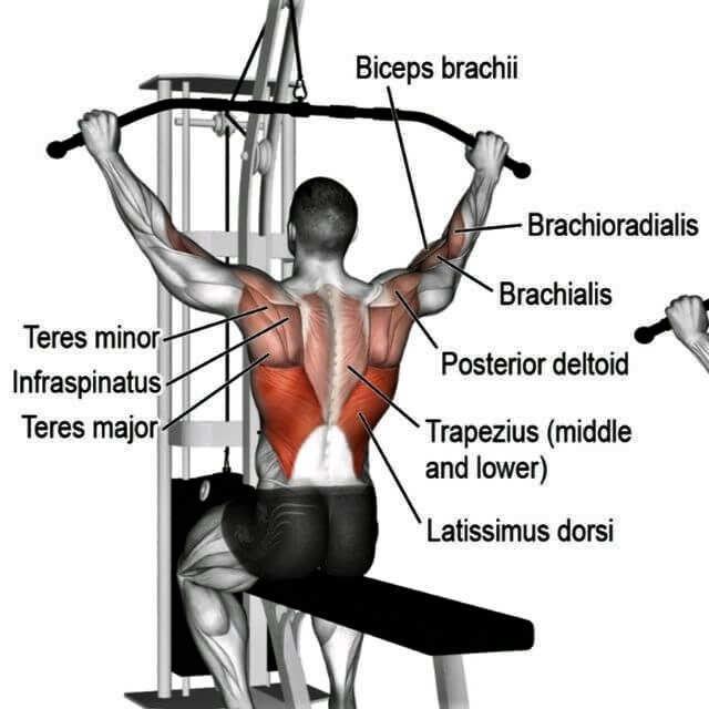 lat-pulldown-machine-muscles-worked